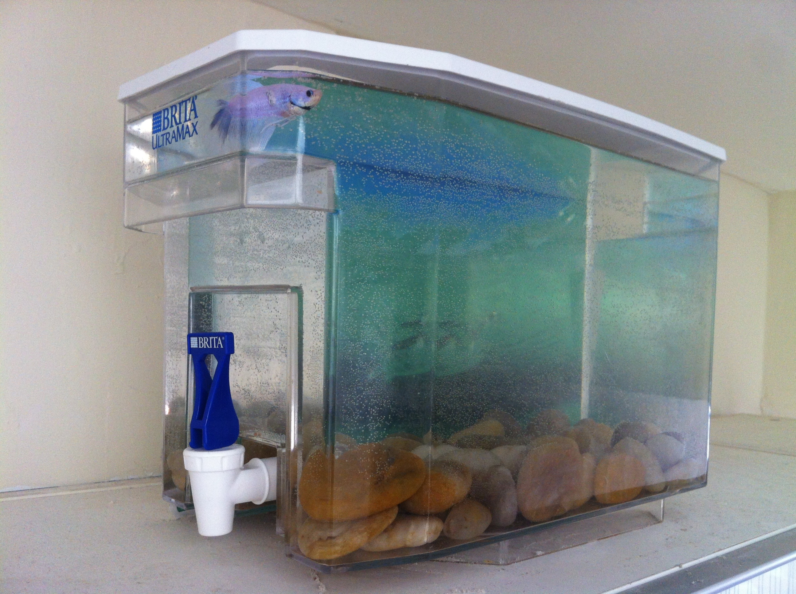 Save and reuse ask the young professional for Diy fish tank